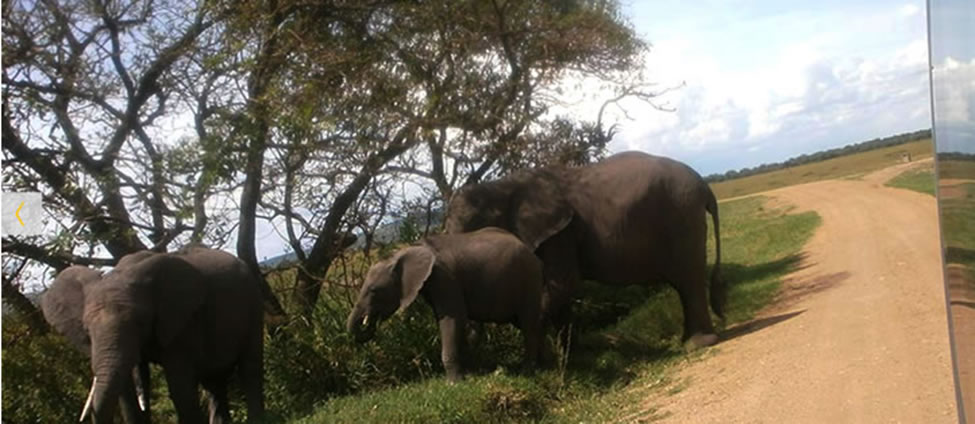 elephants-elengata-olerai-maasai-mara2